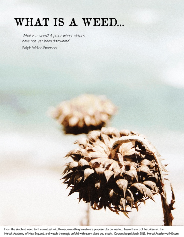 What is a Weed? A plant whose virtues have not yet been discovered. - Ralph Waldo Emerson