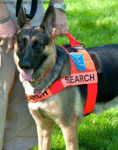 Search And Rescue Dog Training Dallas