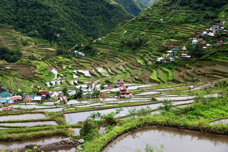"""Holidaying in the #Philippines? Don't miss out on the Banaue Rice Terraces! A 2,000-year-old terraces carved into the mountains of #Ifugao, this breathtaking #UNESCOWorldHeritage site is frequently called an """"Eight Wonder of the World"""" by all those who visit!  #BanaueRiceTerraces #tourHQrecommends #traveltheWorld"""