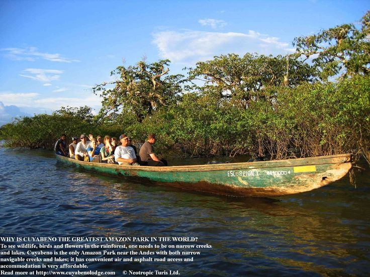 CUYABENO IS THE BEST #AMAZON PARK OF #SOUTHAMERICA FOR PRICING, ACCESS & #WILDLIFE VIEWING http://www.cuyabenolodge.com/mobile/cuyabenolodge.htm
