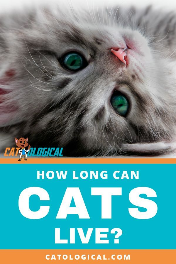 how long do cats live - 600×900
