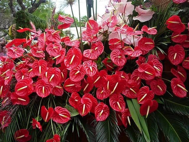 flores-para-jardim-externo-com-sol