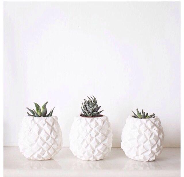 Home inspiration cactus decor