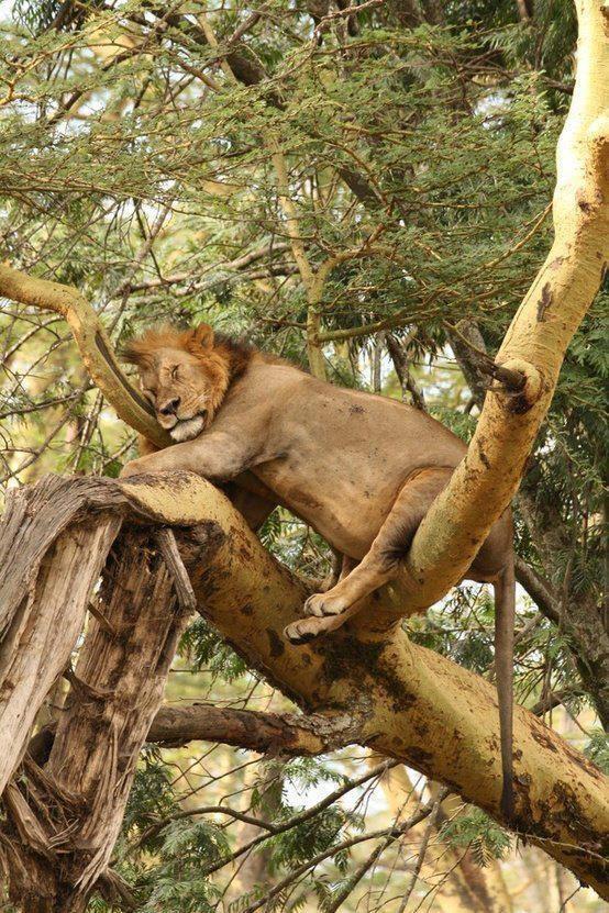 What animal never sleeps?