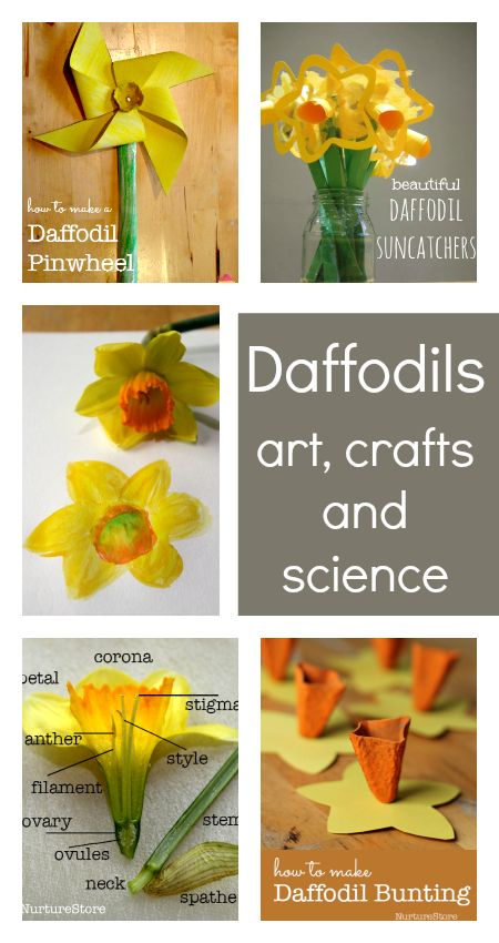 Gorgeous daffodil crafts for kids to make, plus daffodil science nature study and art ideas - great St. David's Day lesson plans