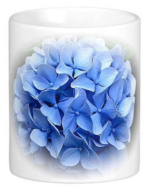 Reliable Hydrangeas have come a long way in the last few years. There are now so many beautiful colours. This charming blue is one of the originals. As a long-lasting cut flower, hard to beat!