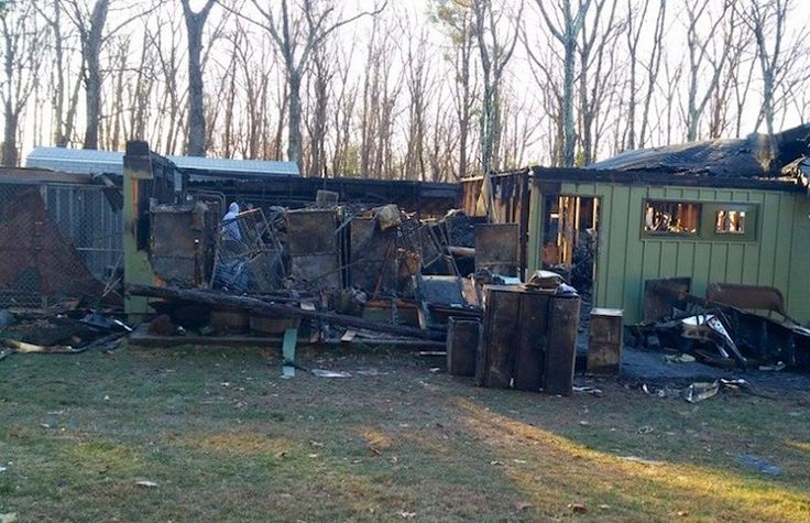 Heartbreaking — 56 Pets Perish in Fire at NoKill Shelter