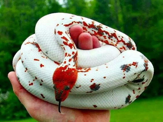 Brightly coloured snake