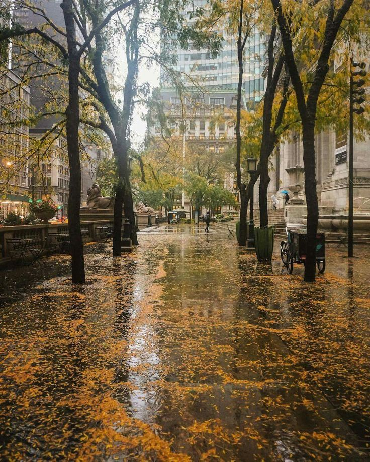 """""""Watching the rain is as beautiful as watching the sunset or the sunrise and it is even better because in addition to watching you can also listen to it, the fantastic music of the drop sounds!"""" ~ Mehmet Murat ildan (NYPL The New York Public Library) Credit: @pictures_of_newyork Elena"""
