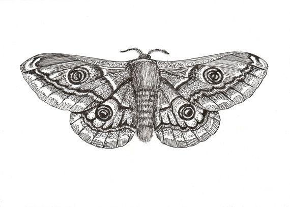 Moth drawing - photo#38