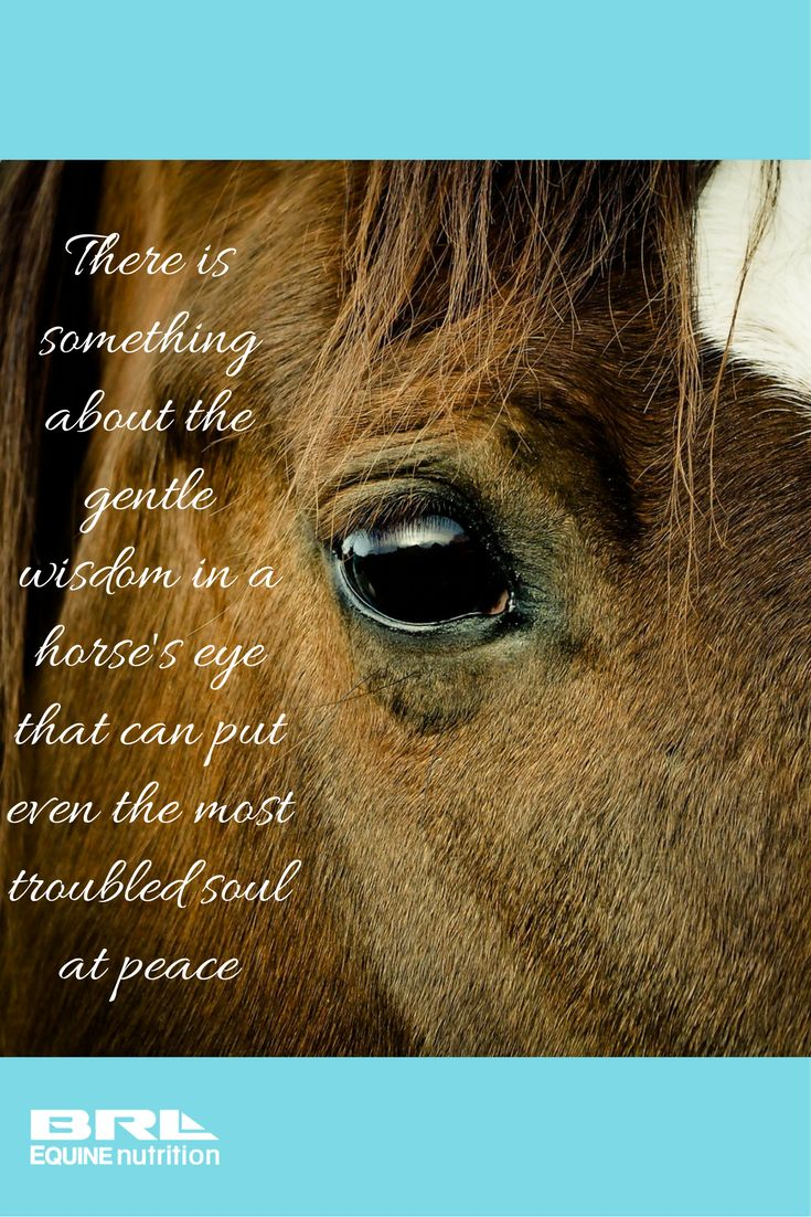 There is something about the gentle wisdom in a horse's eye that can put even the most troubled soul at peace. beautiful horse quote