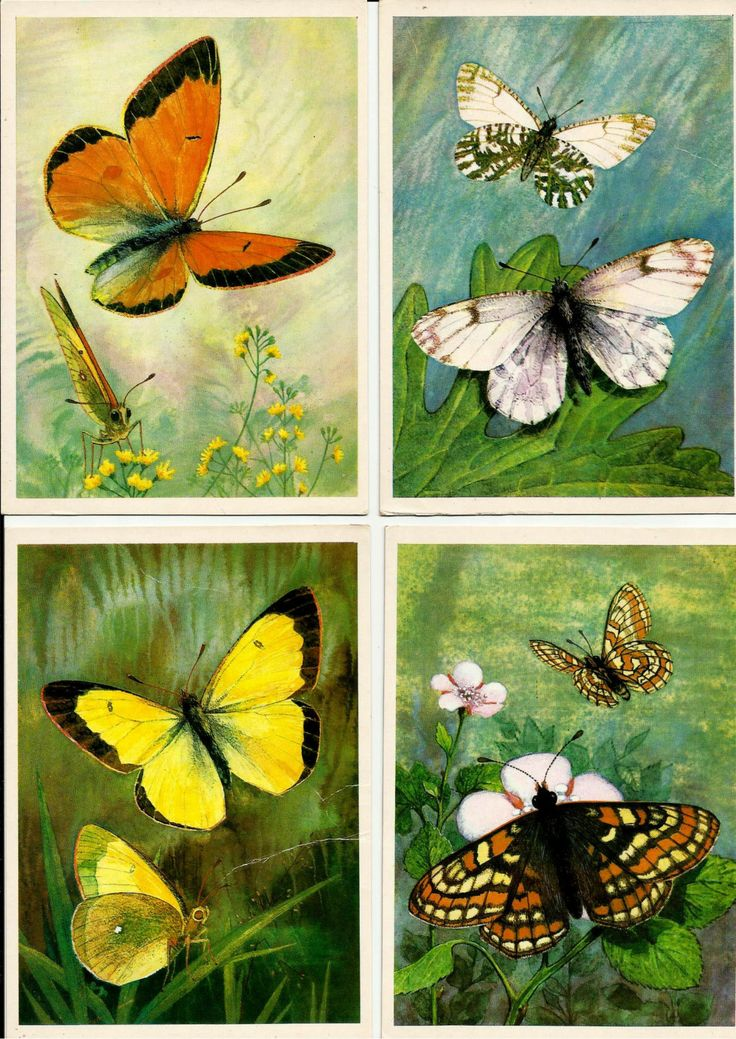 Butterflies - Vintage Russian Soviet Postcards set of 16 by LucyMarket on Etsy