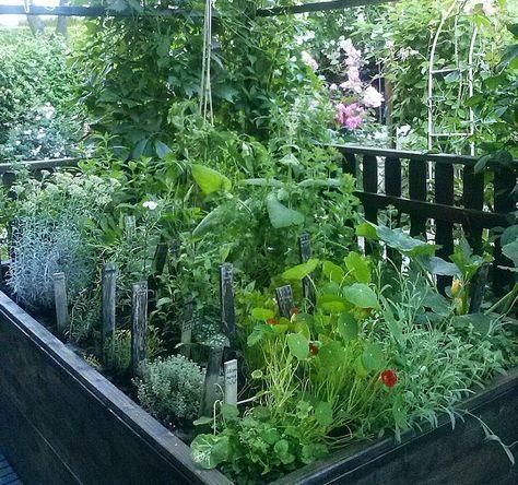 253 best pflanzen images on pinterest medicinal plants herbal medicine and herbs. Black Bedroom Furniture Sets. Home Design Ideas