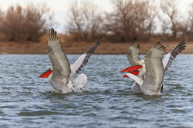 Bird Watching in Danube Delta, Romania