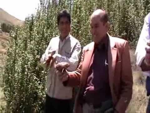"""#PERMACULTURA #PERU La Cosecha del Futuro """"Siembra y Cosecha de Agua Lluvia"""" - #RAINWATER https://www.youtube.com/watch?v=Umd2V8FfLkM SANJAS DE INFILTRACIÓN, REPRESAS, CURVAS DE NIVEL, RETENCIÓN DE AGUA LLUVIA, PONCHO VERDE. - MEDICAMENTOS: TOCOSH (penicilina natural de papa), PUTAJA (gel para el cáncer de estómago), CACHI-CACHI. - VELOCIDAD DE FILTRACIÓN DEL AGUA RETENIDA: ARCILLA=30m/año ; ARENOSO=100m/año"""