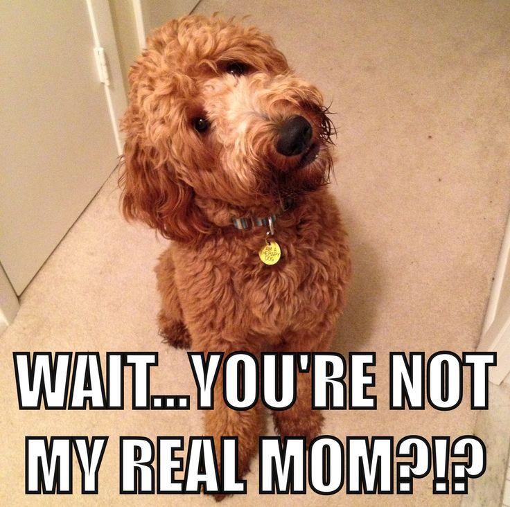 He still has no idea he was adopted! Shhhhh!!!!