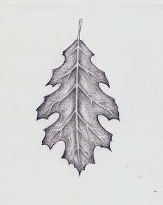 ... Oak Leaf Tattoos on Pinterest | Leaf Tattoos Acorn Tattoo and Tattoos