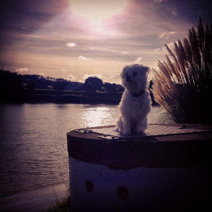 Maddison along side the Wanganui river