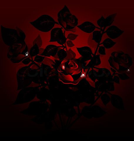 dark background of a large black bush of red roses'