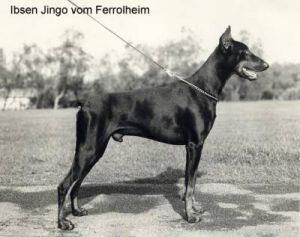 IBSEN JINGO V. FERROLHEIM -