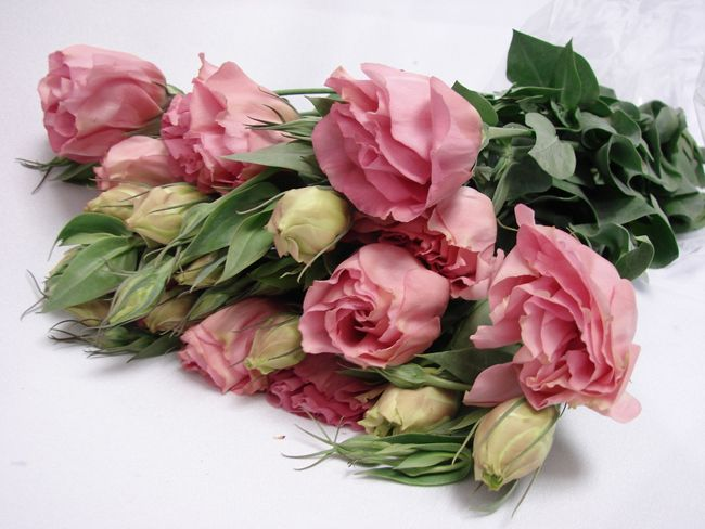 Flower Availability @ Bunches for Africa Western Cape (Pty) Ltd