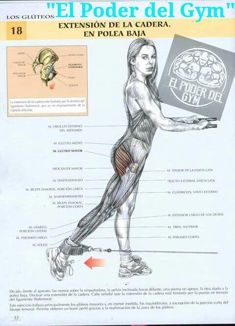 Extensión de la cadera-Gluteo