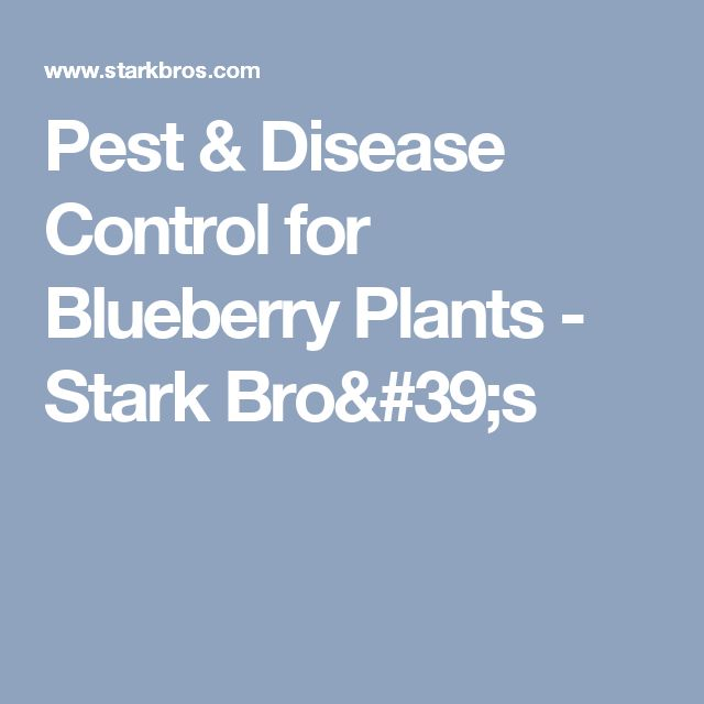 Pest & Disease Control for Blueberry Plants - Stark Bro's