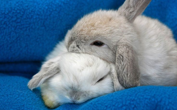 Animals Hd Wallpapers 2015 Funny Kissing Hugging Baby: Blue Deskto Phd Wallpaper With Two