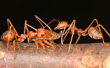 Can Insects Feed a Hungry Planet? http://www.care2.com/causes/can-insects-feed-a-hungry-planet.html