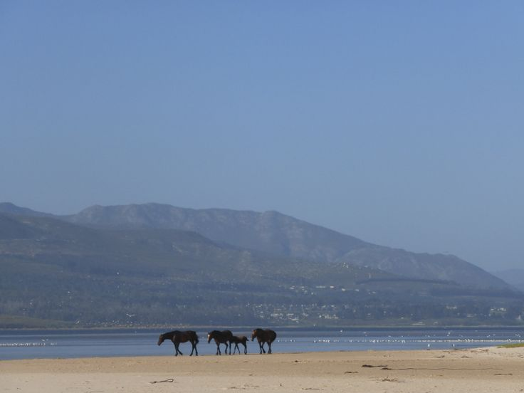 Looking back towards Arabella Golf Estate near Kleinmond. The wild horses roam this whole area. A magical spot.