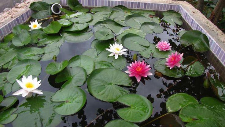 Nilüfer havuzu Büyüklük:  54,0 KB (Kilobyte)