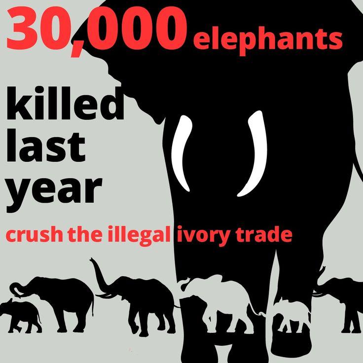 Crush the #ivory trade. Save #elephants