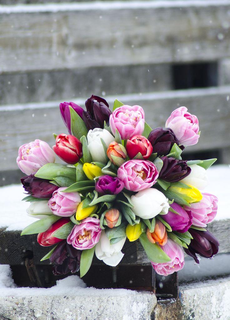 Buchet colorat cu lalele. O surpriza minunata in orice anotimp! Colored tulips bouquet