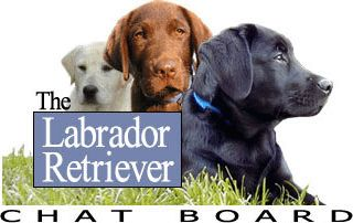 Labrador Retriever Dogs Chat Forum Board - Dogs, Puppies, Photos, Training, Pictures, Rescue Forums - Powered by vBulletin