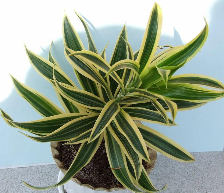 10 rostlin, které u vás doma čistí vzduch a zbavují ho toxických látek