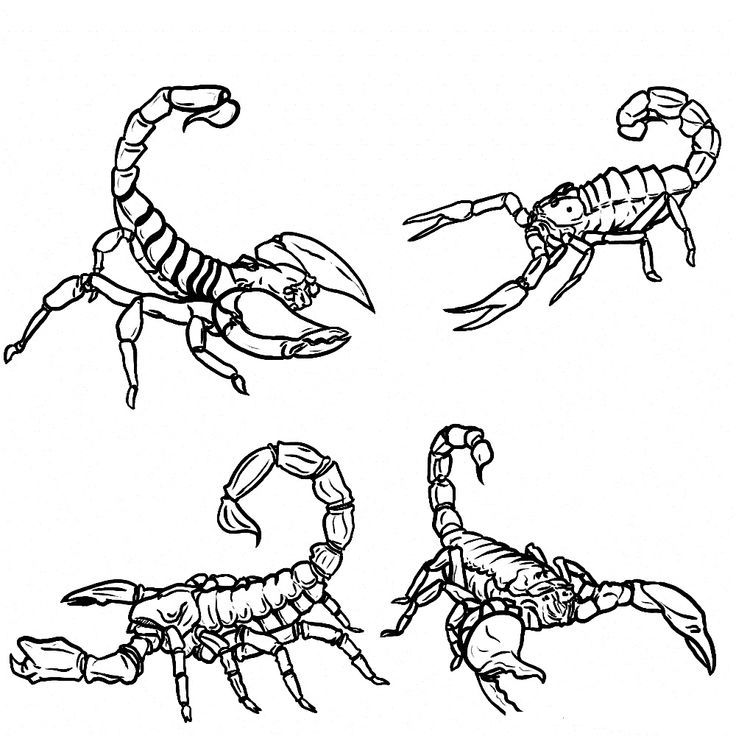 Online Free Printable Scorpion Coloring Pages For Kids For