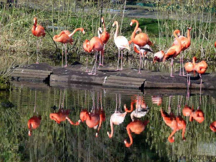 Vorbereitungen für einen Aquarellkurs im Schweriner Zoo | Flamingos im Schweriner Zoo (c) FRank Koebsch (1)
