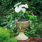 (link) 30 Beautiful Container Gardens ~  Fast, fabulous and fun, container gardens add zing to any deck, patio or yard. Check out our ideas for pretty plant combinations just right for the Midwest.