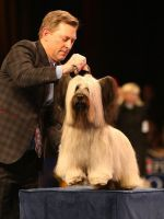 Meet Charlie, The National Dog Show Winner Who Might Inspire Some Puppy Shopping Today #refinery29  http://www.refinery29.com/2015/11/98432/charlie-skye-terrier-national-dog-show-winner