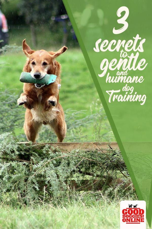 How To Stop Your Dog From Pulling Dog Training Training Your