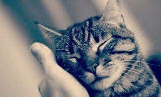 """""""E' così meraviglioso guardare un animale, perché un animale non ha opinioni di se stesso. Lui è! Questa è la ragione per cui il cane è così felice e il gatto fa le fusa. Quando coccoli un cane o ascolti un gatto che fa le fusa, la mente può fermarsi per un istante e uno spazio di calma sorge dentro di te, un passaggio per entrare nell'Essere."""" E.Tolle"""