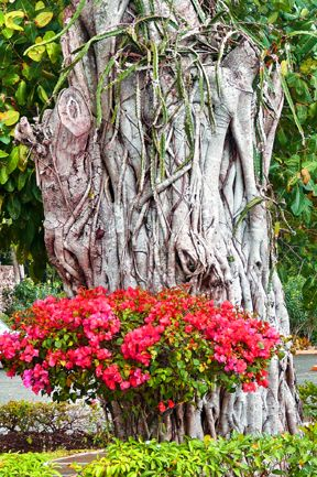 FLORAL TREE TRUNK BY TATIANA LOPATINA.  VISIT OUR WEBSITE FOR MORE GREAT IMAGES www.lailas.com