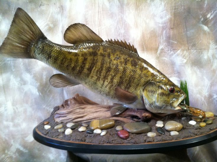 32 best fish mounts images on pinterest fish mounts for Fish taxidermy prices