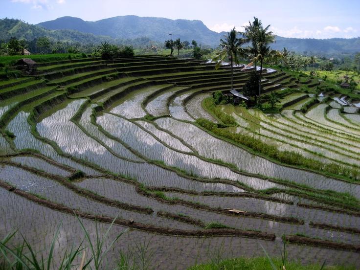 Sidemen, <3 Bali <3