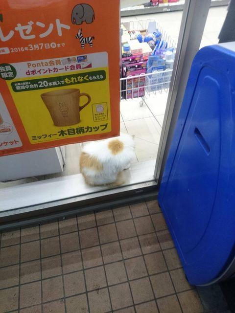 ローソン店内にネコおったwww