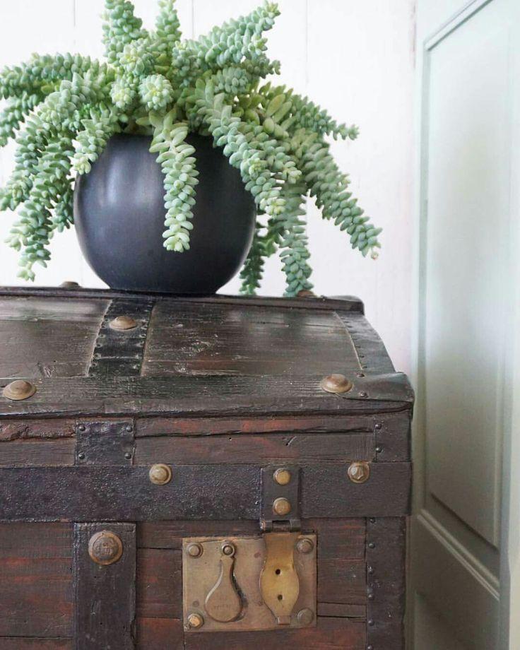 Nieuw product! Stoere houten kist met prachtig beslag. Het lijkt wel een schatkist...