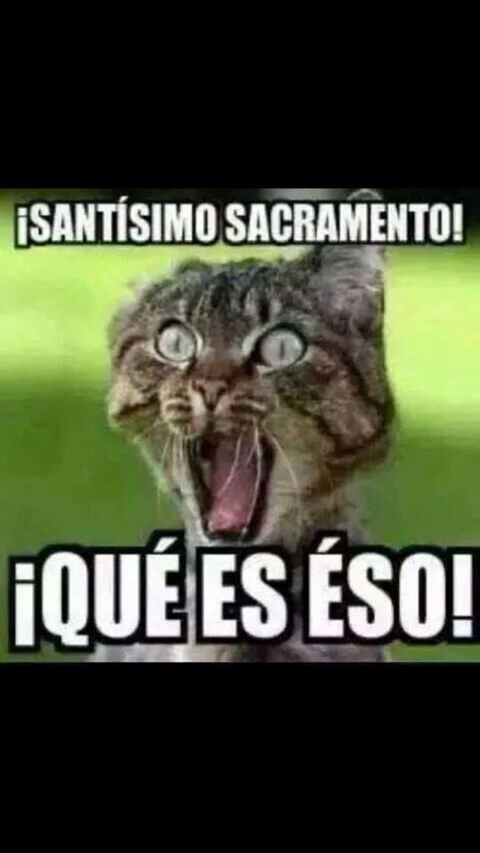 Ja ja ja! dios mio meme gato #compartirvideos #imagenesdivertidas #watsappss( I don't know what it says but the cats face I mean come on)