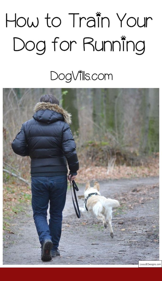 How To Train Dog To Stop Barking At Strangers And Pics Of How To