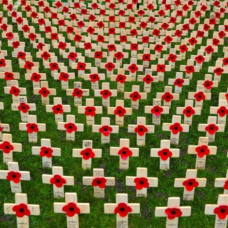 field of poppies for remembrance day