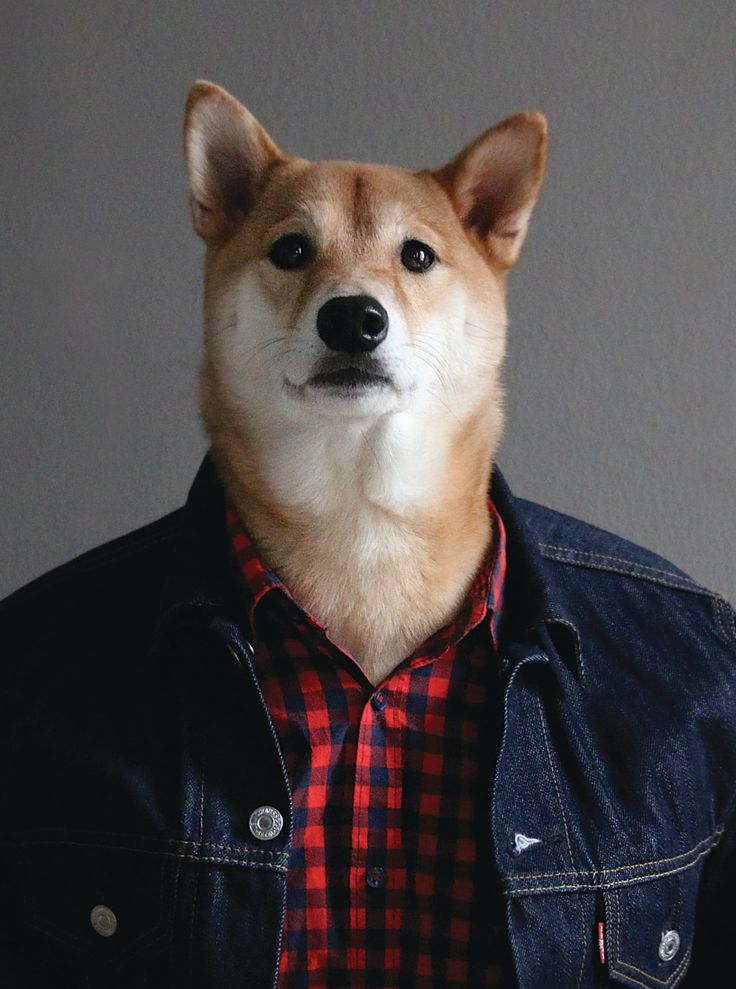 Nice Presents From The Dog Part - 13: From Menswear Dog Presents: The New Classics By David Fung And Yena Kim  (Artisan